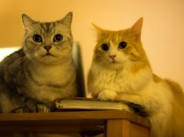 空前の猫ブーム!猫カフェや看板猫など!関東のおすすめ猫スポット10選