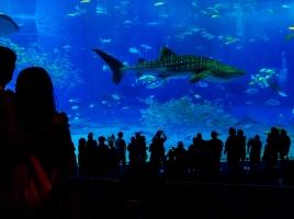憧れビーチドライブへ!美ら海水族館や宮古島など「沖縄」おすすめ観光スポット10選