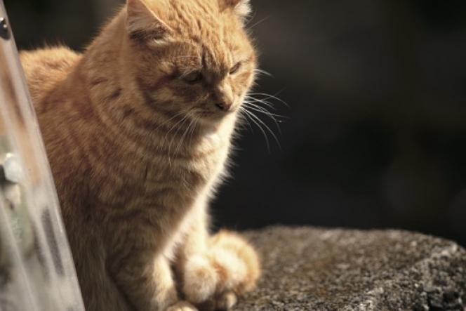 ahead cat