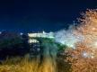 2016年版!桜・花火・海水浴・紅葉・グルメなど四季を通じて楽しめる伊豆・箱根のドライブコース