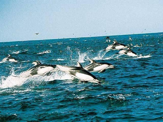 野生のイルカとクジラと出会う!銚子海洋研究所