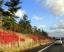 高速道路の壁面のツタ。あれってどんな役割があるの?