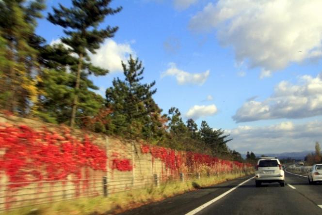 高速道路 ナツヅタ