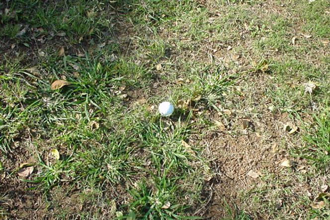ゴルフ ⚠︎のライ