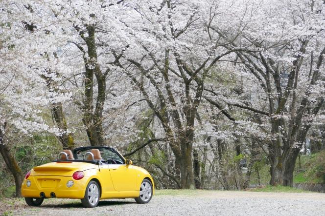 オープンカー 春