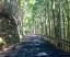 狭い山道で対向車と鉢合わせ!登りと下り、どちらが優先?