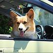 ペットオーナーもおすすめ!車でのお出かけにペット用カー用品・便利グッズ15選
