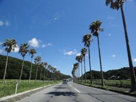 関東圏の南方の楽園!南房総のオススメ観光スポット