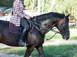 馬やラクダ…動物で公道を走るのは違反?免許は必要?