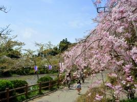 お花見ドライブデートに!関東近郊おすすめ桜名所&お花見スポット10選