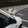 冬は要注意!なぜ猫はエンジンルームに入るのか?入ってしまった際の対処法は?