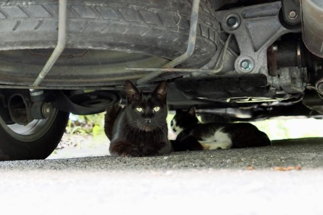 猫 車の下