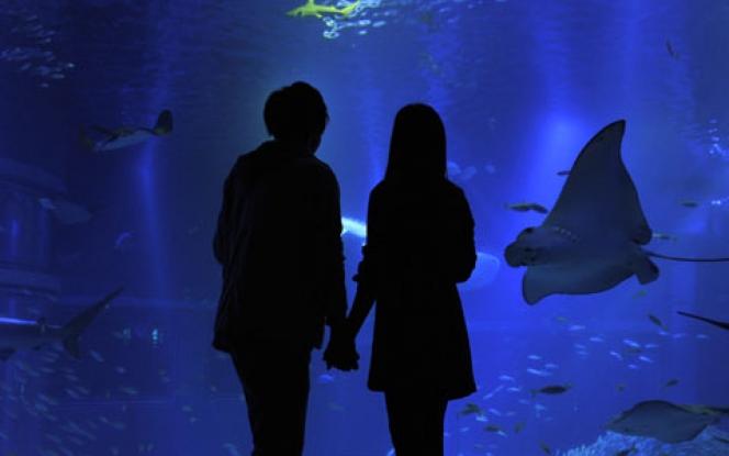 水族館デート