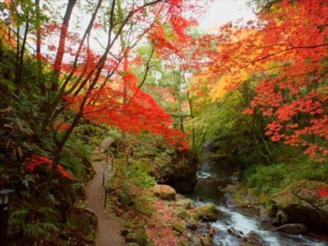 万葉公園紅葉