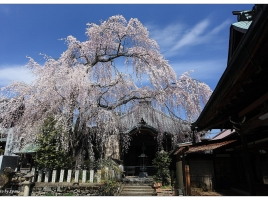 お花見日帰りドライブ!関西近郊のおすすめ桜名所&お花見スポット16選