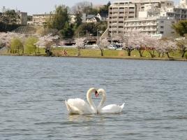 一度は行きたい、水の都の名所!千波湖のオススメスポット